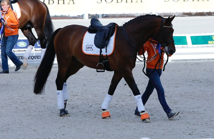 Edward Gal's horse at WEG 2014