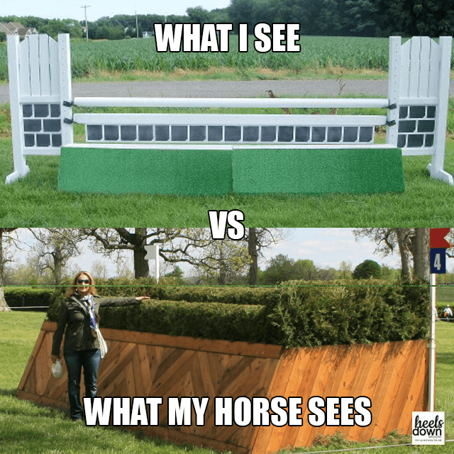 What I See vs. What My Horse Sees