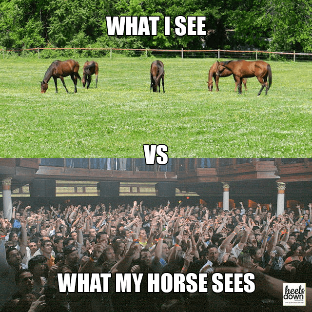 what i see vs  what my horse sees  u2013 heels down magazine