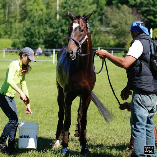 Totally Vital: Learn to Take Your Horse's Temperature, Pulse and Respiration, Presented by Wahl