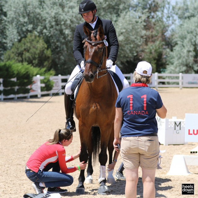 Cool Stories of NAJYRC: Ava MacCoubrey Qualified As A Rider But Decided To Groom