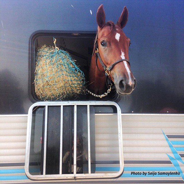 Max Corcoran: Learn How Your Horse Travels Best, Presented by Wahl