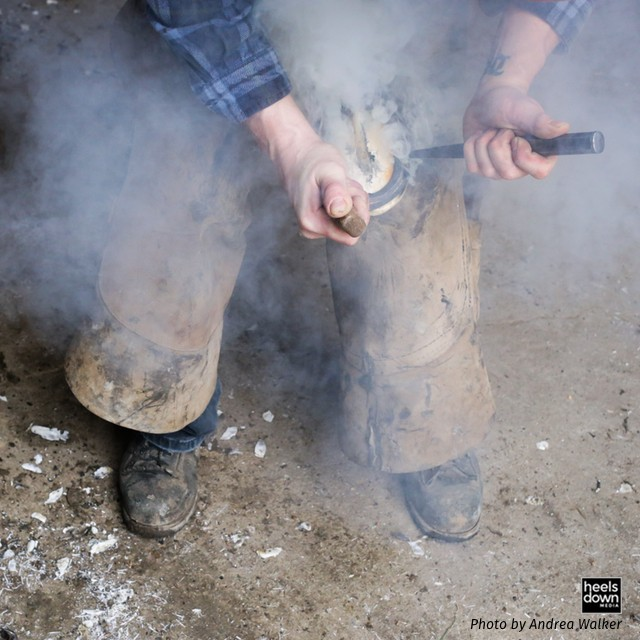 Get Your Horse's Shoeing Schedule Back on Track