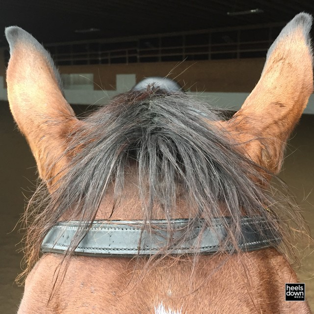 Braiding the Whispy Forelock, Presented by Wahl