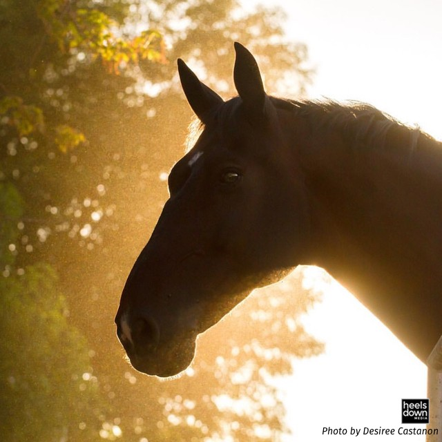Inside the Horse's Mind: Why Is My Horse Nervous by Himself? Presented by Kensington Protective Products