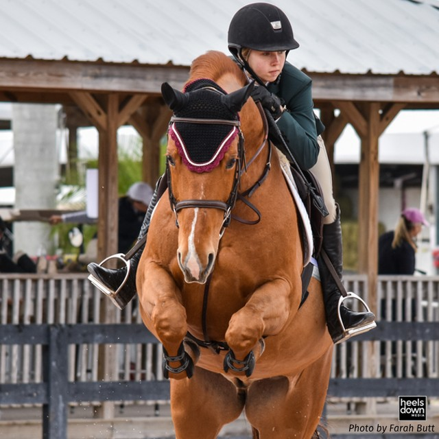 Inside the Horse's Mind: Do Horses See Colors?, Presented by Kensington Protective Products