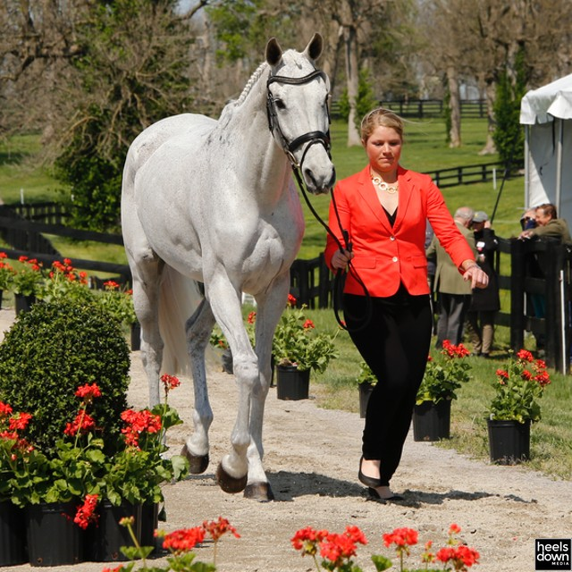 Eventing Explained: Why Are Event Horses So Skinny?