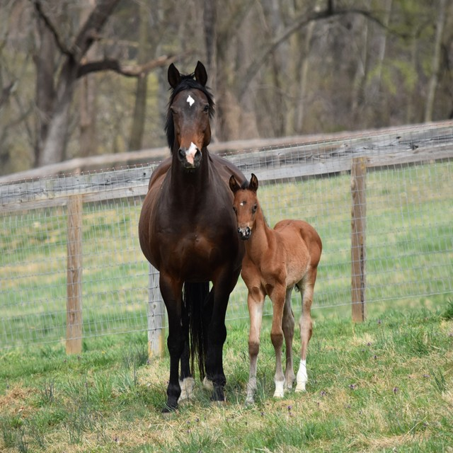 #FridayFoal: Help Name This Hilltop Farm Filly