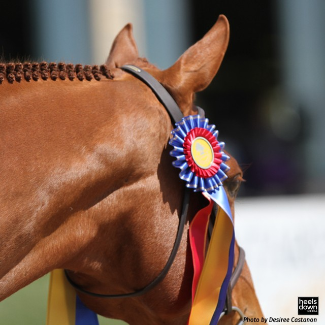 In the Magazine: Step into the Judge's Booth - A Different Take on Horse Show Life