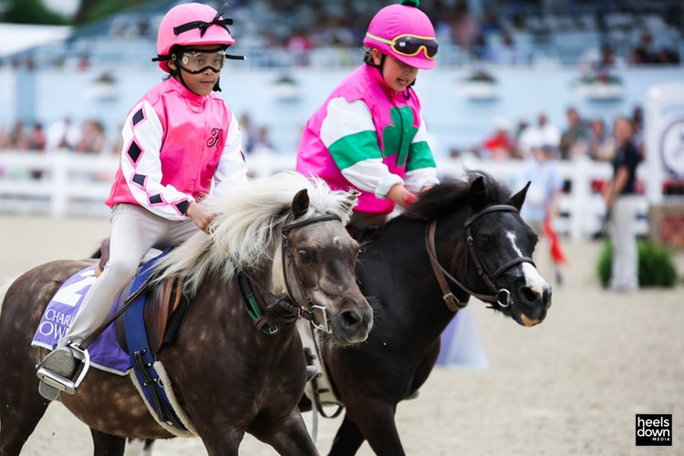 Cool Stories of Devon: Behind-the-Scenes with the Adorable Shetland Pony Race Competitors