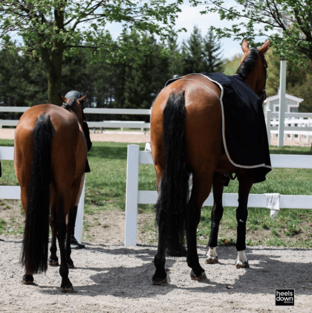 Max Corcoran: Keep Your Horse's Schedule the Same, Presented by Wahl