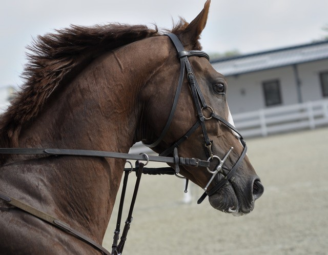 Inside the Horse's Mind: How Horses See, Presented by Kensington Protective Products