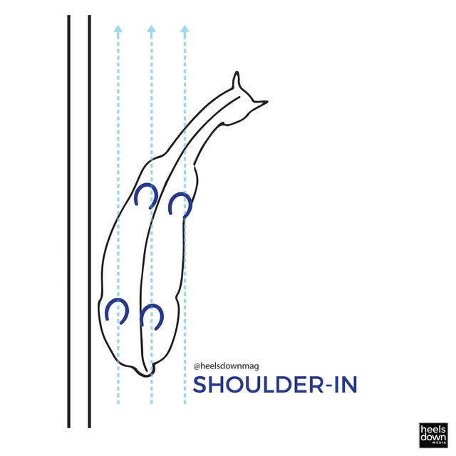 Dressage Movements Explained: The Difference Between Travers, Renvers, & Shoulder-In