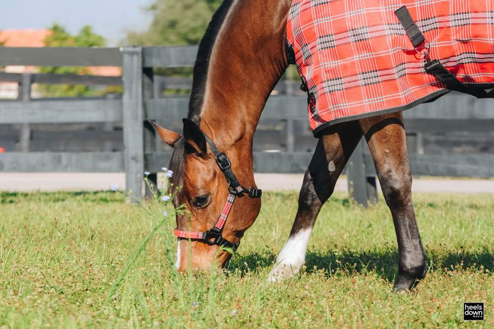 Happy Horses: The Importance of Routine, Presented by Kensington Protective Products