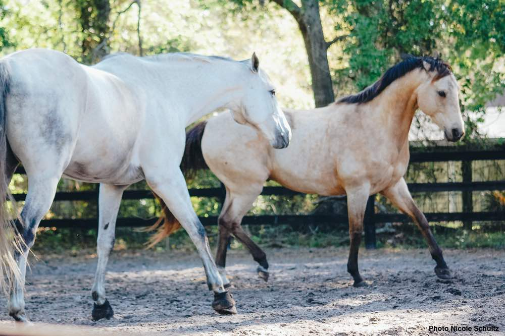 Happy Horses: Herd Dynamics, Presented by Kensington Protective Products