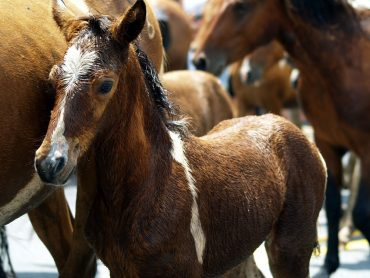 Wondering How You Can Help Horses Affected by Hurricane Harvey? Donate to USEF Equine Disaster Relief Fund