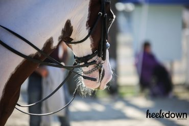 Should You Clip Your Horse's Whiskers and Ears?