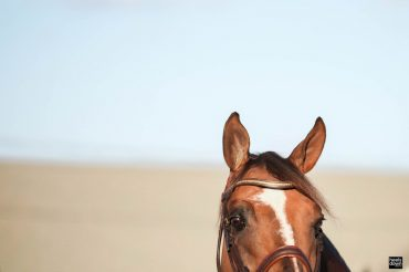 Why One Horse Is Enough