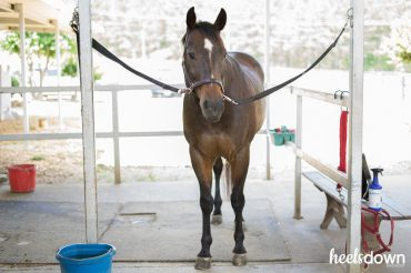 Teach Your Horse to Stand Still on the Cross Ties, Presented by Wahl