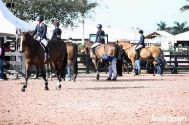 Horse Show Grooming Fails, and How to Recover - Presented by Wahl