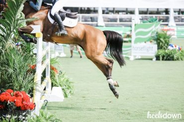 Is My Horse Fit Enough? Presented by Standlee Premium Western Forage