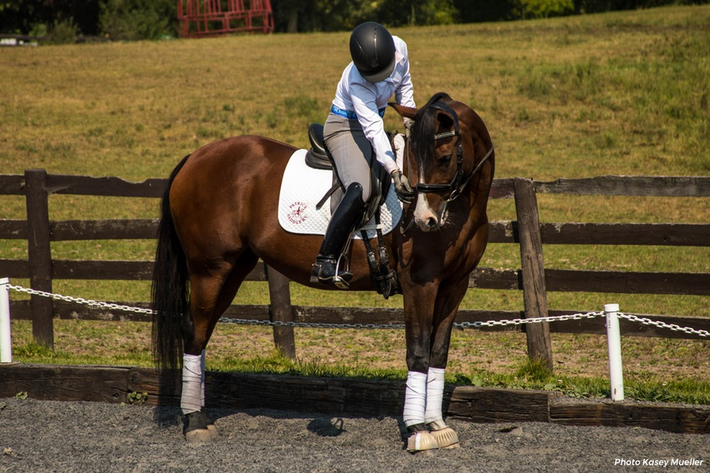 Praise The Horse: Build Confidence with Positive Training