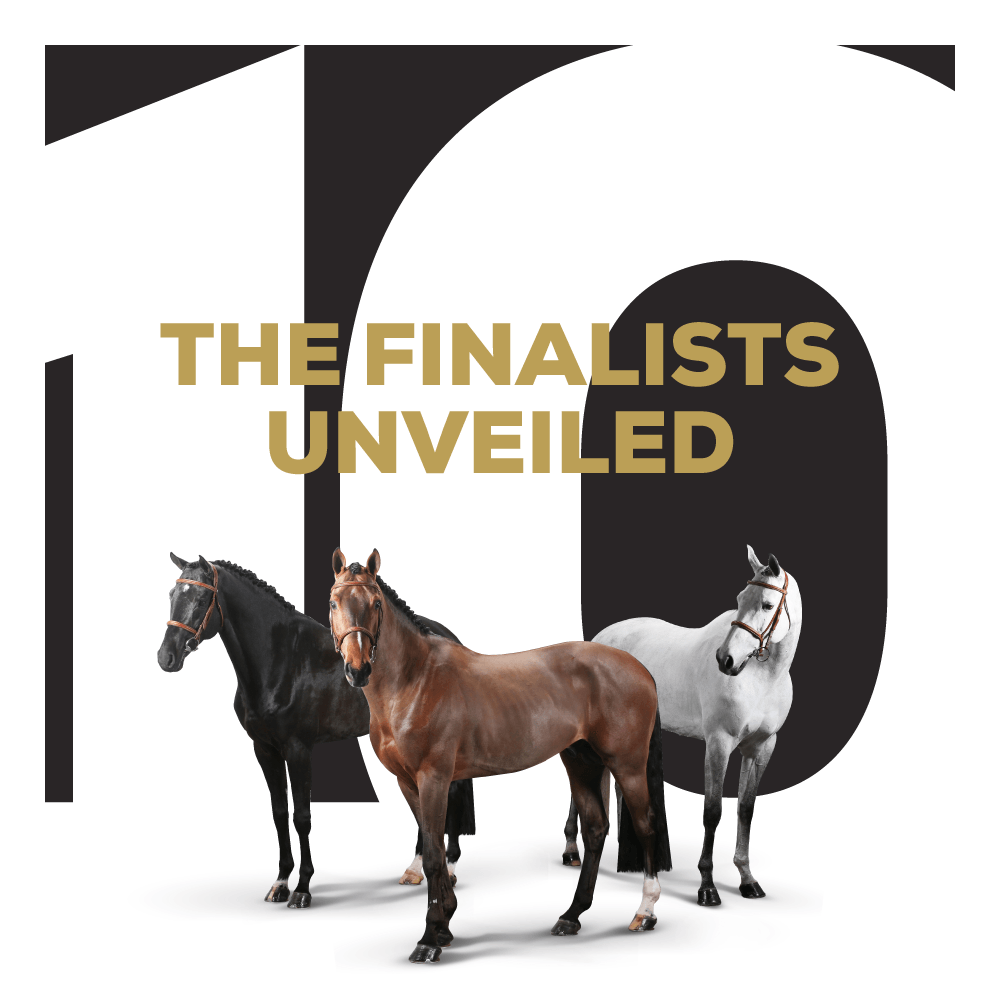 The Ten: The Horse Auction Reinvented