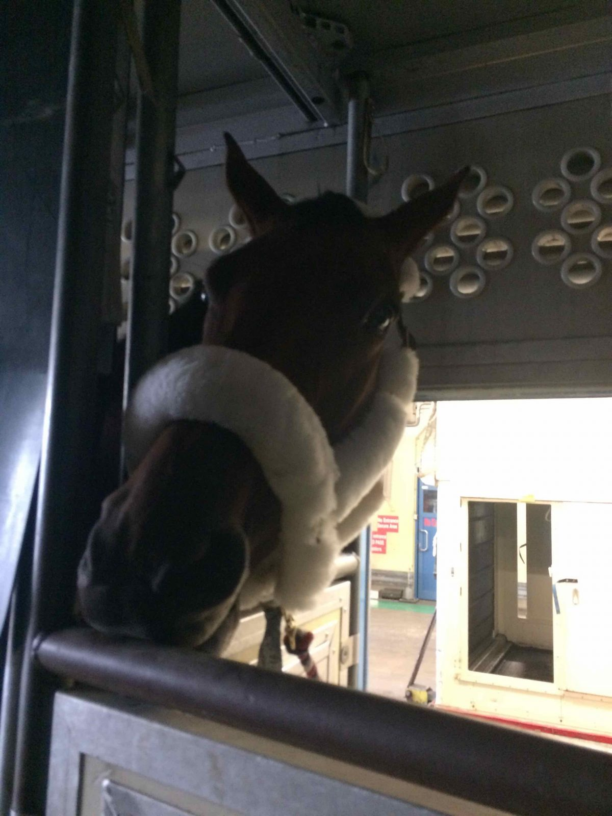 Flying with Horses, Presented by Wahl