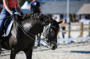 Tame Your Horse's Unruly Mane Like A Professional Groom, Presented by Wahl