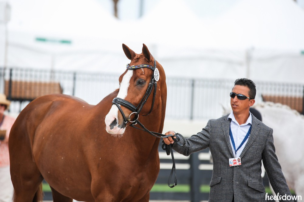 Made in the USA: Meet The American-Bred Horses Competing At WEG