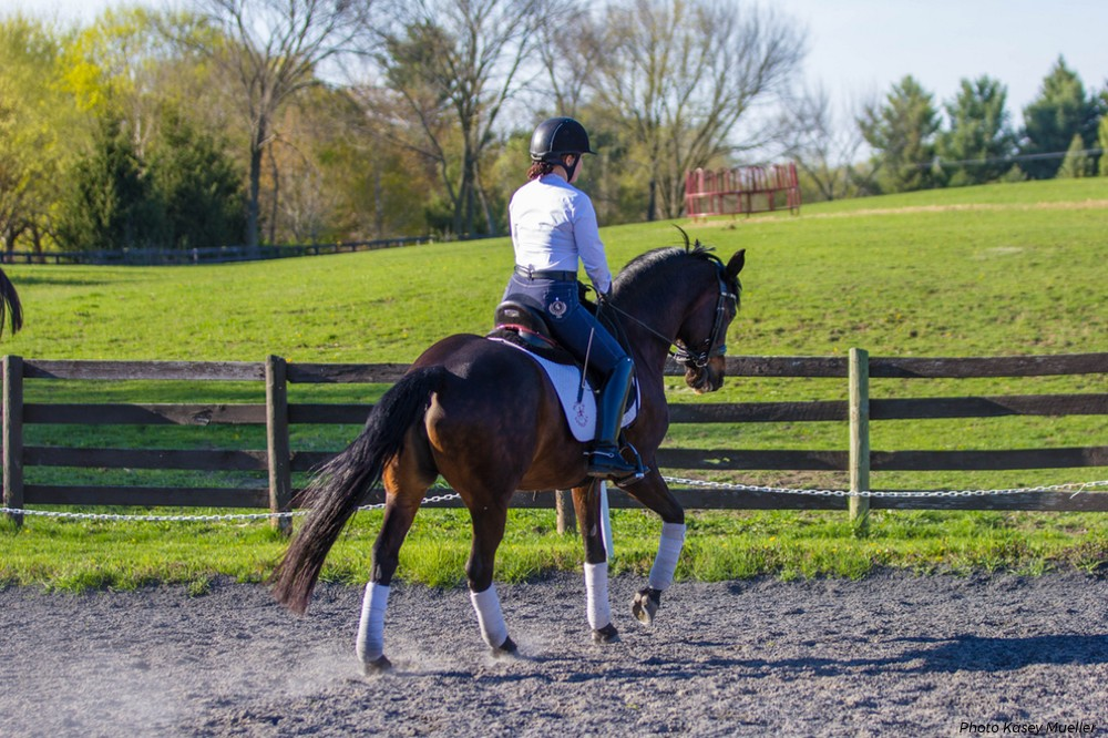 Dressage: Nail the Test with Crisp Transitions