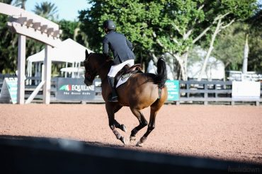Warm Up Strategies for Hot Horses and Lazy Horses, Presented by Wahl