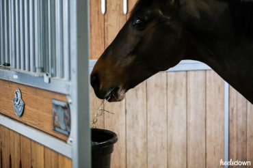 Could My Horse's Diet Be Hurting Him?