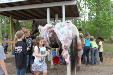 Horse Welfare: Pony-Painting Parties vs Keeping Sight of the Real Issues