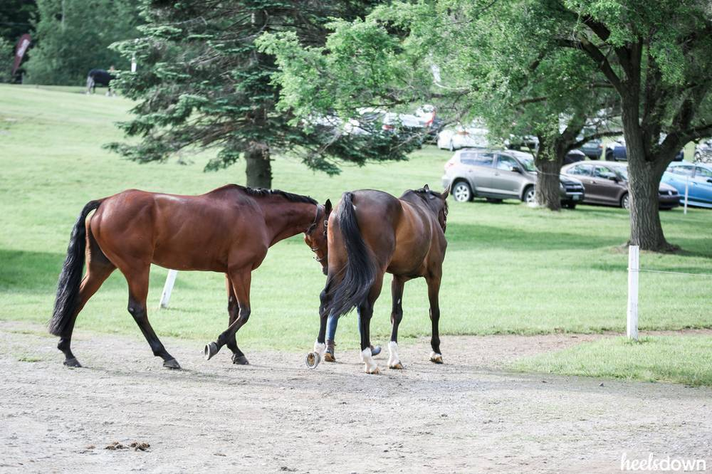 Dealing With the Herd-Bound Horse