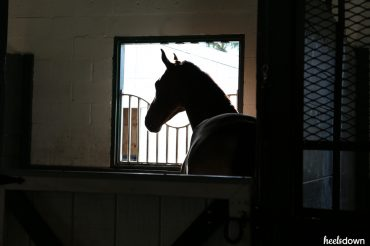 Is Your Horse Barn Sour?