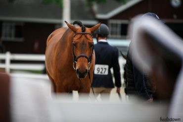 Make Your Horse's Life Stress-Free