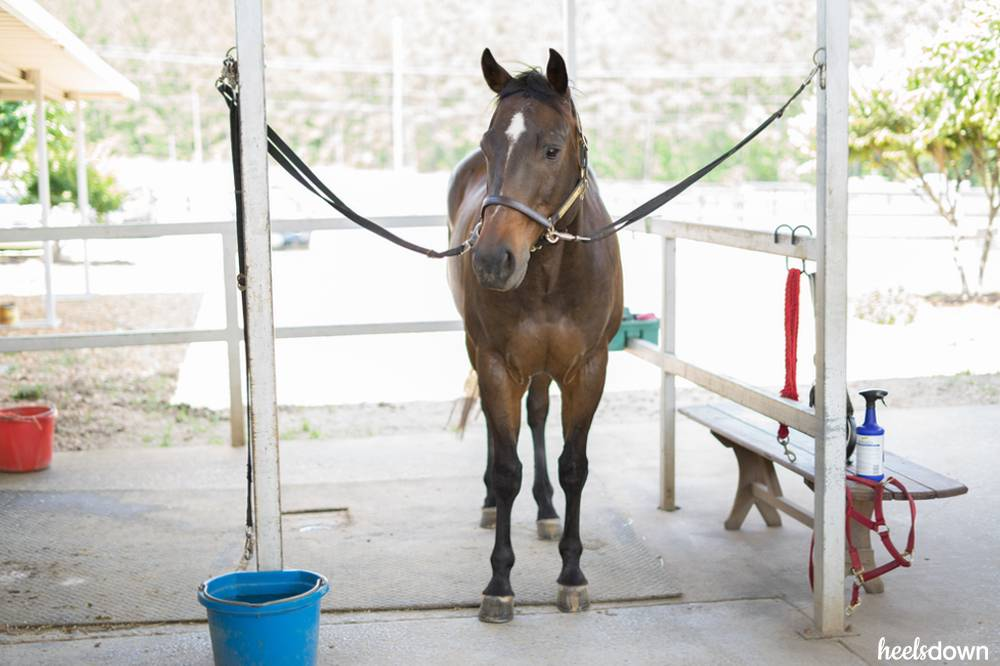 How An Electric Toothbrush Can Help You Clip Your Horse, Presented By Wahl - Heels Down Mag