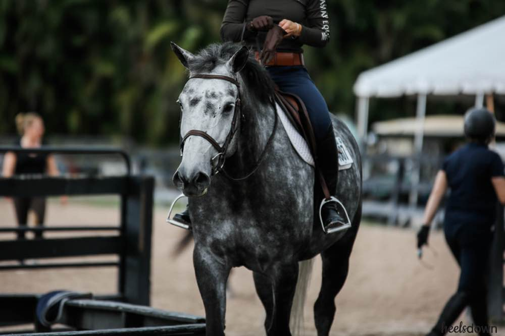 Expensive Breeches Don't Make You Ride Better - Heels Down Mag